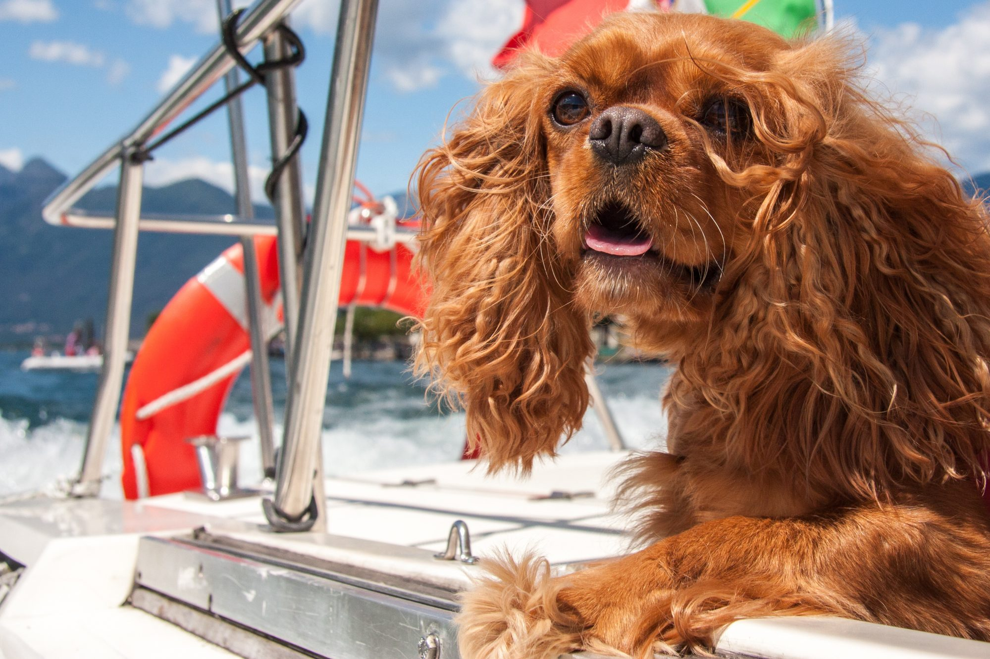 Boating with Dogs: Tips for Taking Your Dog Boating